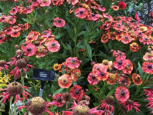 One months rain in just 24 hours but we still enjoyed a great day out at RHS Rosemoor